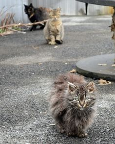 Six Myths About Feral Cats. Learn how to take care of your community cats here: www.aspca.org/pet-care/virtual-pet-behaviorist/cat-behavior/stray-and-feral-cats