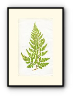 Edward Joseph Lowe Fern (Davallia Solida.--Pinna) Antique Botanical Print, 1860 Wood Block Engraving, Book Plate by TheOldMapShop on Etsy