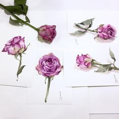 Another set of roses in One-layer technique. By Phatcharaphan Chanthep 2016  #watercolor #watercolorist #art #artist #paint #painting #sketch #rose #one #layer #technique #studio
