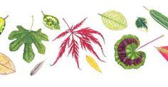 Rachel Pedder-Smith Born 1975 Leaves Watercolour on paper 3.75 x 21.5ins (9.5 x 54.5cm)