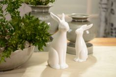 Bunnies. Sunny collection