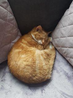 Nigel enjoying his Sunday nap.http://ift.tt/2G1MXer