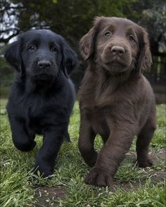 the black looks like my dog. the brown one looks like my old dog.