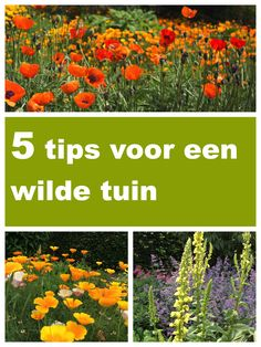 Gardening, Tips, Balcony, Advice, Lawn And Garden, Yard Landscaping, Hacks, Horticulture