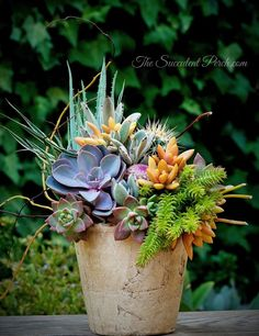 The Colors of a Sunset in a Succulent Container Arrangement design/photo: The Succulent Perch