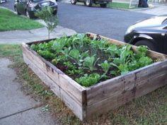 My Backyard Vegetable Garden Backyard Vegetable Gardens Vegetable Garden And Backyard