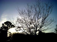 Silhouette 2013