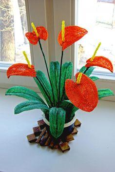 Антуриум  ¡bonitas calas rojas¡ en realidad no se si son calas mas parecen Anthurium