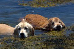 Golden sea monsters!
