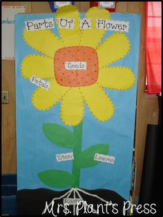 sunflower plant life cycle diagram television wiring diagrams sunny sunflowers parts of plants as seen on first grade fun ways to teach kids about a s