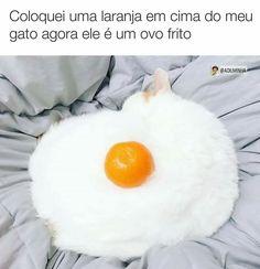 gato é ovo frito.