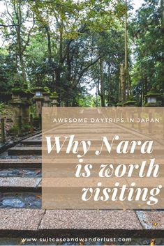 Here's why Nara is worth visiting. Have a day trip from Kyoto to Nara.