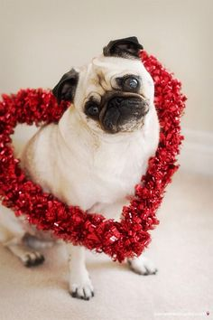 Buenos días! Estamos listos para San Valentín! #dogvalentines #amorincondicional #amistadperruna