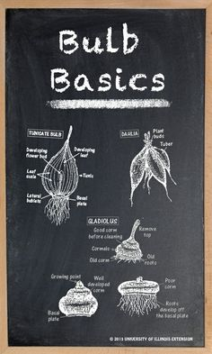 Learn your bulb basics.