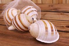 Κοχύλια Συσκευασία Σαλιγκάρι 8-10cm SH171225-910  Κοχύλια σε σχέδιο σαλιγκάρι και χρώμα φυσικό.Διαστάσεις: 8-10cmΠεριέχει 4 τεμάχια. Η τιμή αφορά τη συσκευασία. Snail, Animals, Animales, Animaux, Snails, Animal Memes, Animal, Animais, Shells