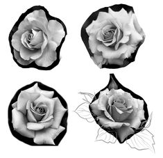 Rose Drawing Tattoo, Tattoo Drawings, Tattoos, Floral Tattoo Design, Tattoo Designs, Tattoo Outline, Men Stuff, Rose Flowers, Phone Wallpapers