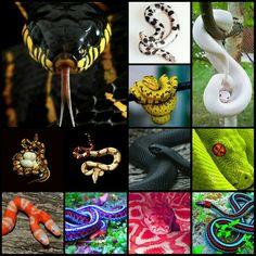 Snakes, Snakes, Snakes...