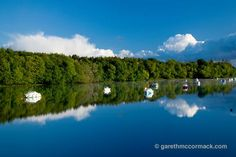 River Moy, Ballina, Co. Mayo - Europe's most prolific Salmon river! County Mayo, Ireland Homes, Small Ponds, Emerald Isle, Flora And Fauna, Grandparents, Fly Fishing, Salmon, Scotland