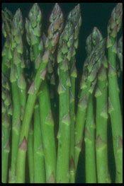 teelt tips voor asperge