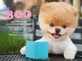 Boo The Dog