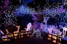 40 Stunning Outdoor Christmas Tree Decorations! Christmas Celebrations