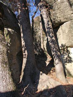El Árbol como soporte