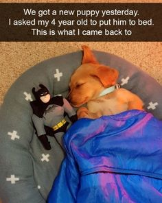 32 More Good Boy Dog Memes To Help You Laugh Away Your Day | CutesyPooh