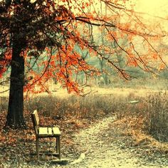A place to sit and relax in the beauty of nature