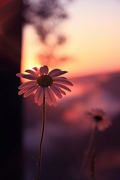 Daisies - Photography, Landscape photography, Photography tips Wallpaper Nature Flowers, Flower Background Wallpaper, Sunflower Wallpaper, Beautiful Flowers Wallpapers, Beautiful Nature Wallpaper, Cute Wallpaper Backgrounds, Pretty Wallpapers, Flower Backgrounds, Beautiful Sunset