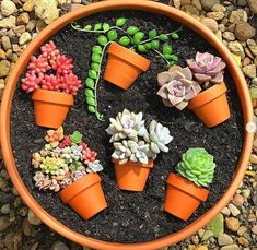 55 creative DIY succulents ideas for you Page 44 of 55 Succulents plants DIY potted plants succulents idea. The post 55 creative DIY succulents ideas for you Page 44 of 55 appeared first on Garden Diy. Succulent Arrangements, Cacti And Succulents, Planting Succulents, Planting Flowers, Potted Plants, Potted Flowers, Succulent Gardening, Succulent Terrarium, Container Gardening