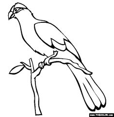 violet turaco coloring page free violet turaco online coloring