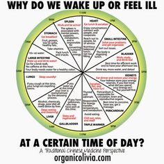 TCM Body Clock: Why Do We Wake Up or Feel Ill at a Certain Time of Day?   Organic Olivia