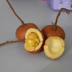 Tampoi, wild fruit from Sarawak