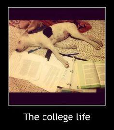 Do My Homework | Essay Tigers