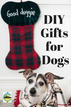 Discount Airfares Through The USA To Germany - Cost-effective Travel World Wide Want To Include Your Pup In The Holiday Festivities Without Spending A Fortune? Look at These Great Diy Gifts For Dogs. Diy Gifts For Kids, Gifts For Family, Crafts For Dogs, Kids Crafts, Best Pets For Kids, Cheap Pets, Dog Christmas Gifts, Cheap Christmas, Holiday Gifts