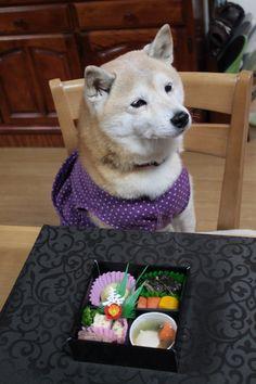 Shibainu Dog's Osechi New Year Dish in Jubako Box 犬用のおせち