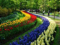 O De Keukenhof, em Lisse, na Holanda, é provavelmente o parque de flores mais bonito do mundo