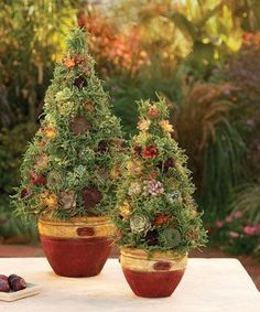 Make a Succulent Topiary. A succulent topiary suggests an evergreen tree yet makes viewers do a double take. It�s a container garden with a twist: a moss-filled cone planted with eye-catching, low-water, easy-care succulents. This topiary offers a fresh and engaging way to expand your garden artistry.