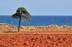 Terra rossa del Salento.