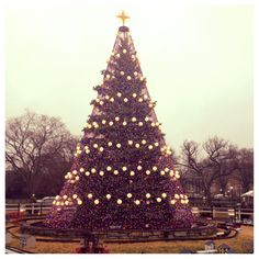 Nice Wallpaper Dealey Plaza Travel Tips Wallpaper America Travel  - Visiting The National Christmas Tree