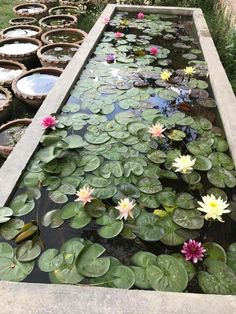 My pond Best Picture For Garden Pond formal For Your Taste You are looking f. My pond Best Picture Small Water Gardens, Container Water Gardens, Indoor Water Garden, Lotus Flower Wallpaper, Yard Art Crafts, Garden Pond Design, Lotus Pond, Water Pond, Fish Ponds