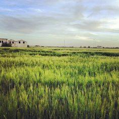 Paisajes de La Mancha