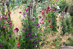 Sweet peas and grasses