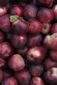 burgundy apples