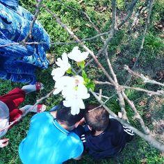 【rasshhana】さんのInstagramをピンしています。 《16.09.2016 цветки вишни🍒#цветыцветы#солнце#трава#сад#красотавмелочах#удивительно#чечня#чечня95#кавказ#осень#природпрекрасна#naturelovers#naturetheday#nature#grass#yellow#foto📷#flowers#chamomile#beautiful#caucasus#checheniya#cherryblossoms#september#cherry#autumn#amazing》