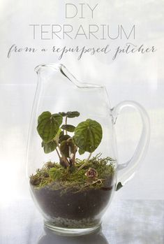DIY Terrarium from a Cracked Glass Pitcher (from All Sorts of Pretty)