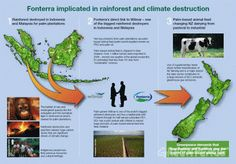 A 2009 Greenpeace investigation revealed that the iconic New Zealand dairy giant Fonterra is implicated in Indonesian and Malaysian rainforest destruction, dead orangutans and driving global greenhouse gas emissions. Rainforest Destruction, Climate Change, New Zealand, Philosophy, Palm, Philosophy Books, Hand Prints
