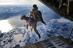 awesome action pic of a Service Dog in action. This K9 working dog has a beautiful view as he takes the ultimate leap of faith straped with his handler in his Service dog harness.