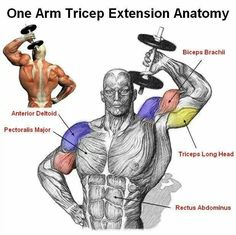 ONE ARM TRICEP EXTENSION The one arm tricep extension is perhaps the best resistance exercise that targets the tricep. This is an isolation exercise that will get those triceps burning. This is a get exercise to incorporate after you have worked chest. Muscle Fitness, Mens Fitness, Health Fitness, Gain Muscle, Fitness Workouts, Fitness Tips, Fitness Models, Muscle Anatomy, Workout Routines