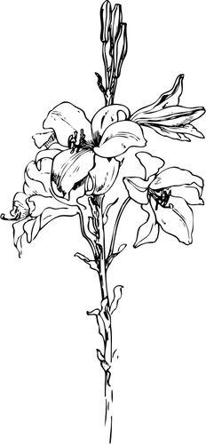 coloring page dandelion  img 11721  blumenmalvorlagen
